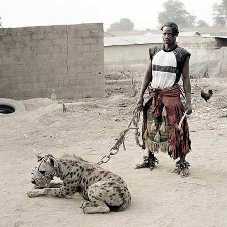 des hyènes apprivoisées (14)